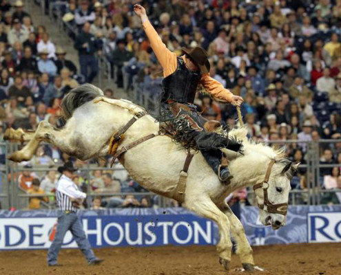 Group Activities – Houston, TX – Houston Livestock Show and Rodeo