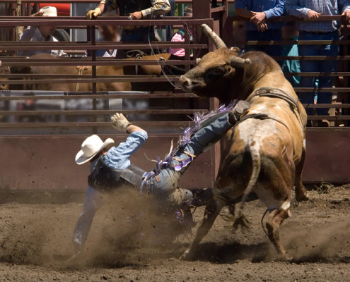 Group Activities – Houston, TX – The Houston Rodeo